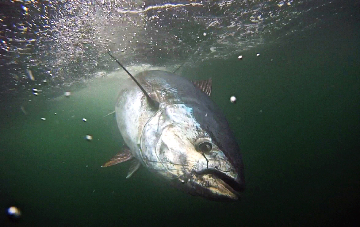 2012 on the water for Rhode island saltwater fishing license