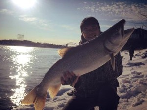 This massive lake trout was caught from on the upper Niagara River this week.