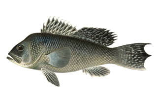Connecticut saltwater fishing regulations on the water for Ct saltwater fishing regulations