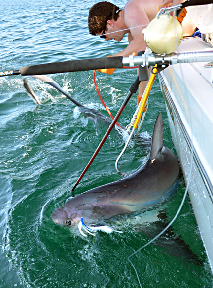 Connecticut and rhode island fishing report 7 19 2012 on the water sharking south of block island has been producing the occasional big mako and big thresher among plenty of blue sharks sciox Gallery
