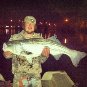 "Nick Parker landed this ""cow"" striper on May 4 in the Connecticut River."