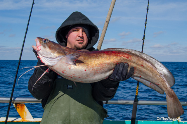 Big hake mixed in with the tilefish over the soft bottom.