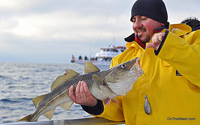 Graphic Designer George Clondas eyes a delicious cod. A smiple dropper rig baited with clam accounted for most of the fish.