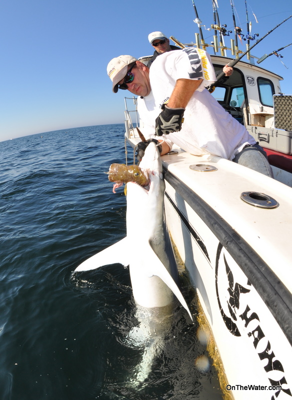 Blue Shark fishing Massachusetts