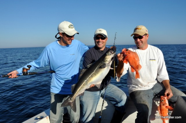 A pollock and two redfish caught on stellwagen bank