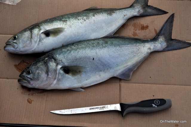 How to Clean Bluefish