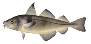 2013 ma fishing regulations for Mass fishing regulations