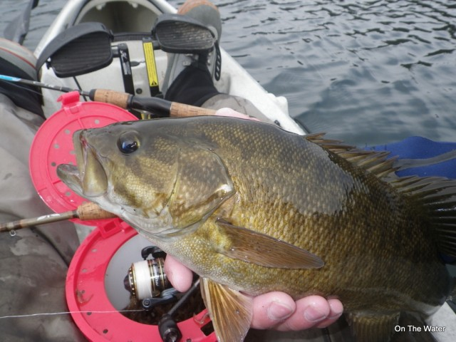 This smallie fell to a single grass shrimp fished on a tiny shad dart on 12/9.
