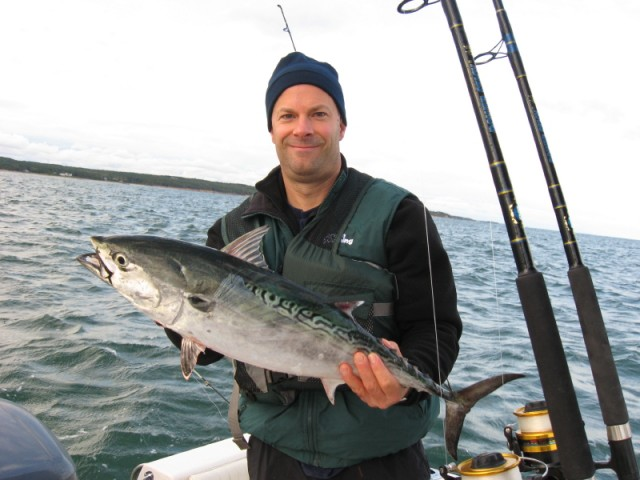 Vineyard Sound False Albacore