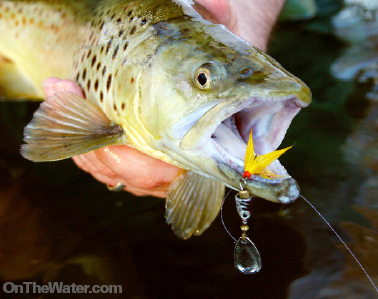 Small spoons and spinners are top choices among local anglers using artificial lures.