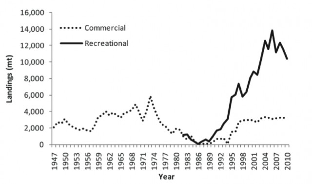 The commercial and recreational landings (in metric tons) of striped bass from Maine to North Carolina, 1947-2010. After the collapse of the fishery in the 1980s, striped bass rebounded and recreational landings spiked in 2006 but have declined since. Commercial landings have held steady around 3,000 metric tons per year. Source: ASMFC.org