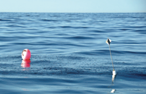 High-flier buoys are a common sight offshore, and they are mahi magnets. On a flat day you can use your radar to locate them.