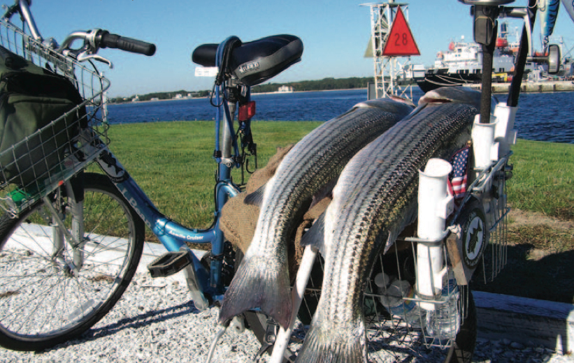 A Guide To Canal Bikes