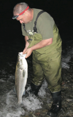 """You can expect Striped bass of this size when fishing Jamestown in the summer months. Focus your efforts between sunset and sunrise for the best shot at a """"keeper"""" striper."""