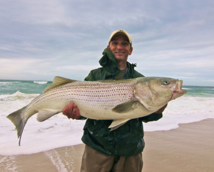Largest striped bass caught in nj deflortaion porn for Surf fishing for stripers