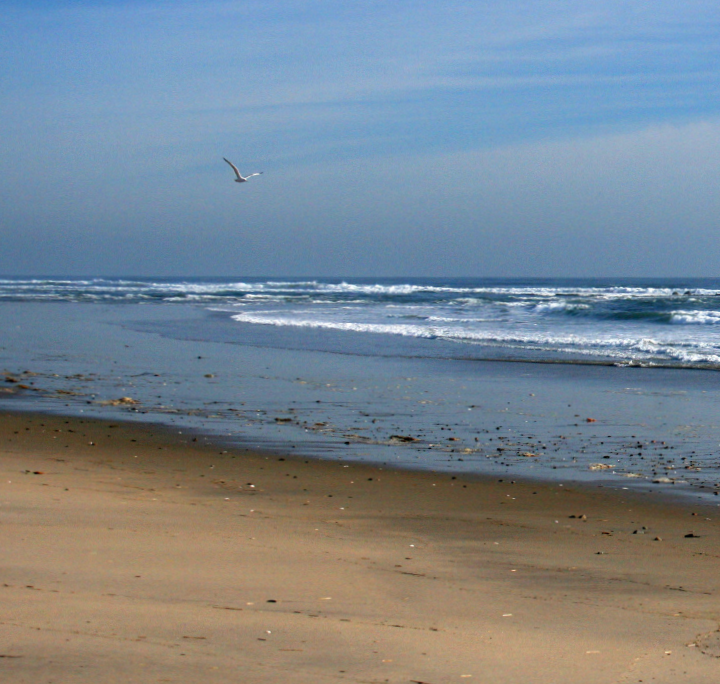 Fishing Plum Island offers inlets, jetties, sandy beaches and juicy shots at spring stripers.