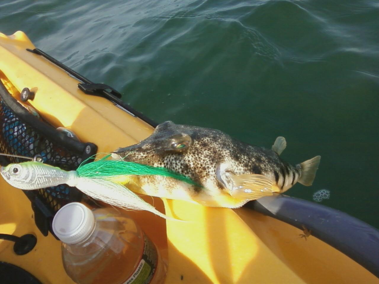 Kingfish In Long Island Sound