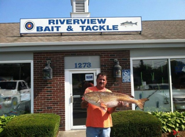 This 35-pound red drum must have had an identity crisis when it mixed in with the stripers gorging on sand eels off Chatham back in July.
