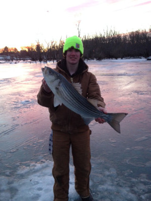 Patrick Sullivan caught this keeper striped bass while ice-fishing on the Connecticut River.