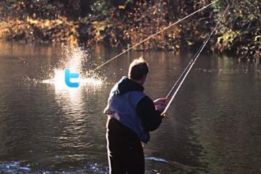 twitter-fish-on