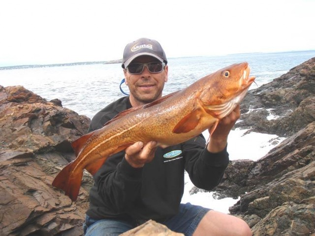 Surf caught cod for Long island surf fishing report