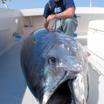Giant Tuna Fishing