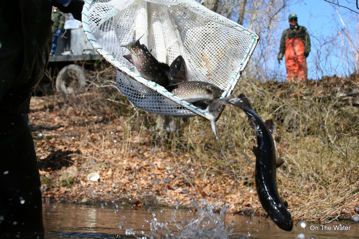 Track the trout stocking for Mass fish stocking