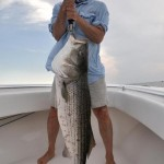 Advisory: Red Sores on Striped Bass