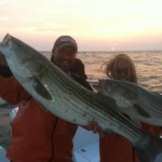 Sores on Striped Bass – Not Mycobacteriosis