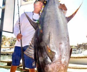 Yocom-tuna-300