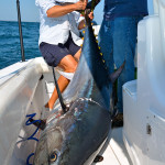 Guest Post: Capt. Bobby Rice's Birthday Bluefin Tuna