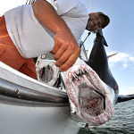 Shark Fishing: A Beginner's Guide