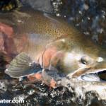 Fishing New York's Famous Salmon River