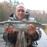 Landlocked Leapers (Wachusett Landlocked Salmon Report)