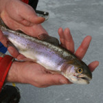 New Hampshire Trout-Stocked Ponds for Winter 2014