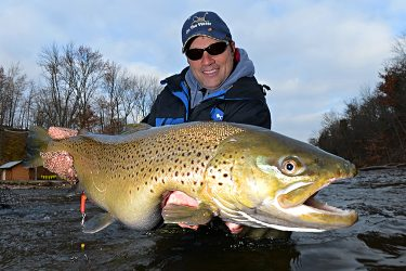 Oak Orchard Brown Trout