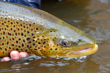 Upstate new york fishing reports for Oak orchard fishing report