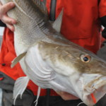 New 2014 Gulf of Maine Cod and Haddock Regulations