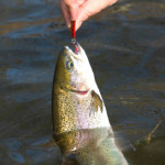 Disease Outbreaks Force Further Change to NJ Trout Stocking
