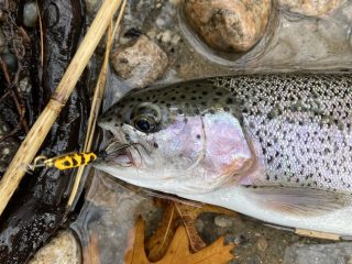 Rainbow trout are the most common trout you'll encounter, and they are usually more than willing to bite a lure, bait or fly.