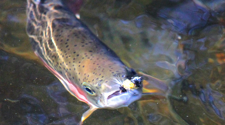 Trout_OpeningDay-2