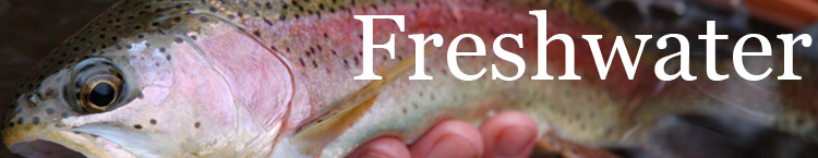 Freshwater banner