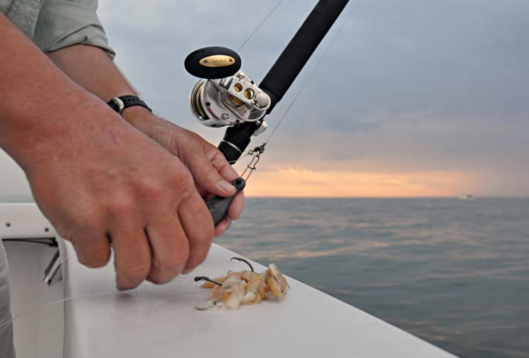 Clams are best fished on circle hooks, as even small stripers will quickly swallow them