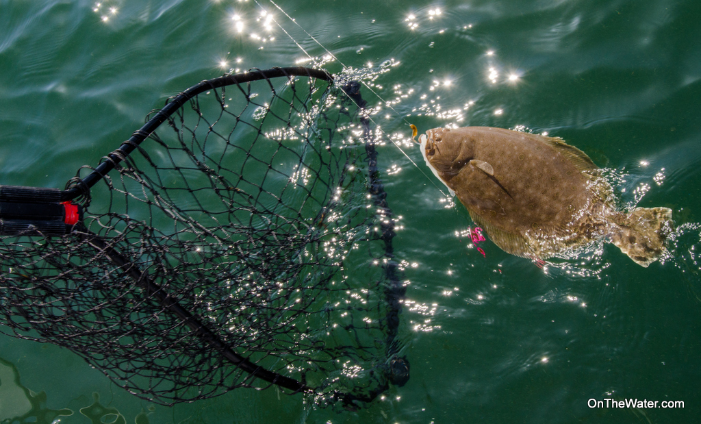 Always net a fluke head-first