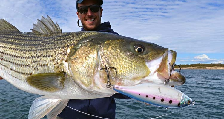 Tips Amp Tricks For Herring Run Stripers On The Water