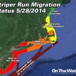 Striper Migration Update 5-28-2014