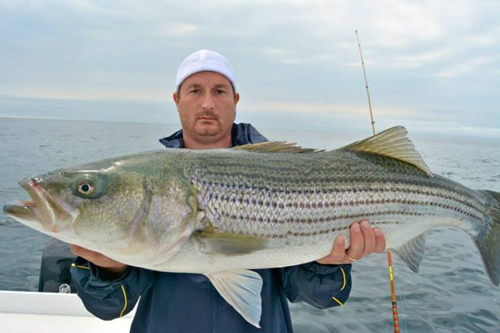 Race point cape cod fishing report for Canal bait and tackle fishing report
