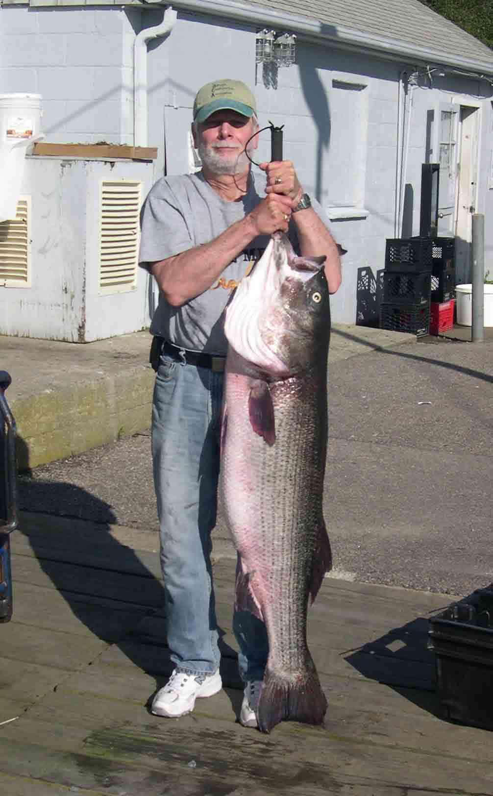 The author with a 51-pound striper entered into the 2009 Striper Cup.
