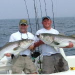 Hickory Shad for Trophy Stripers