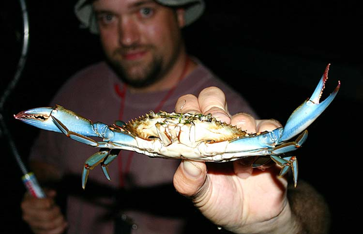 The river is loaded with delicious blue crabs. Several local marinas offer small boat rentals which are suitable for fishing and crabbing.